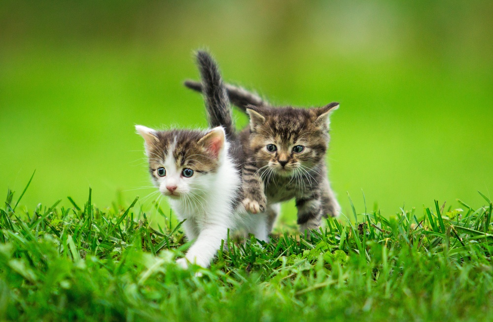 sonhar com gato filhote