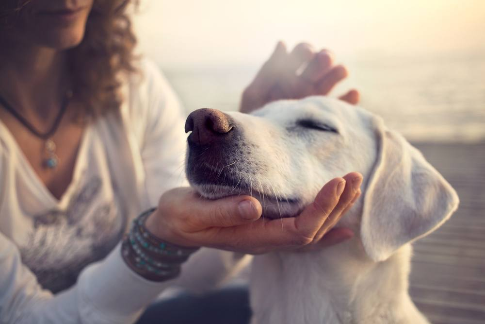 sonhar com cachorros