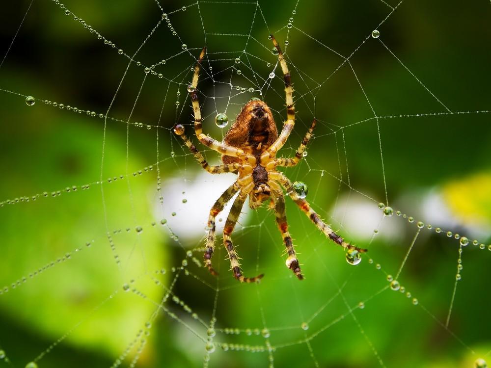 o que significa sonhar com aranha