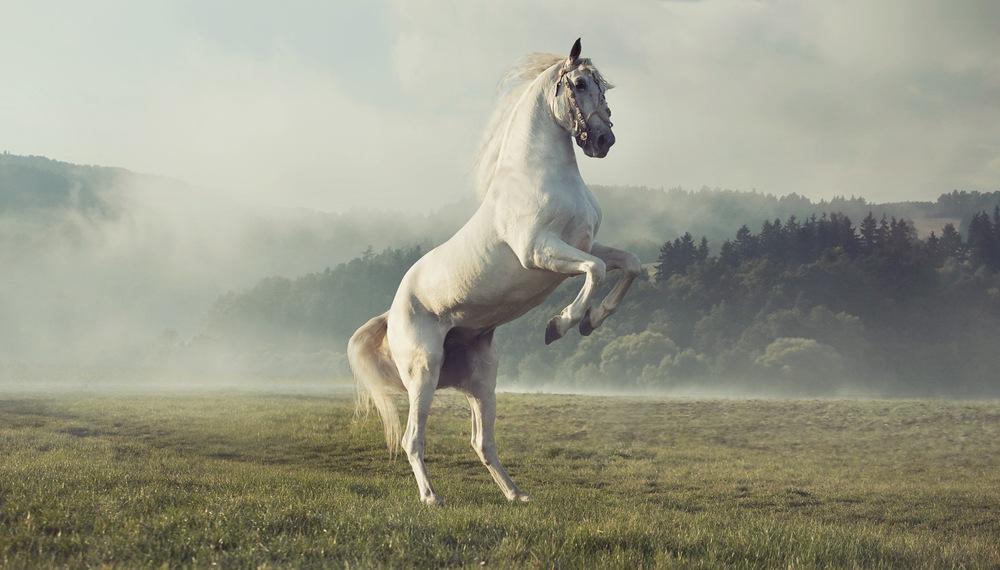 sonhar com cavalo branco