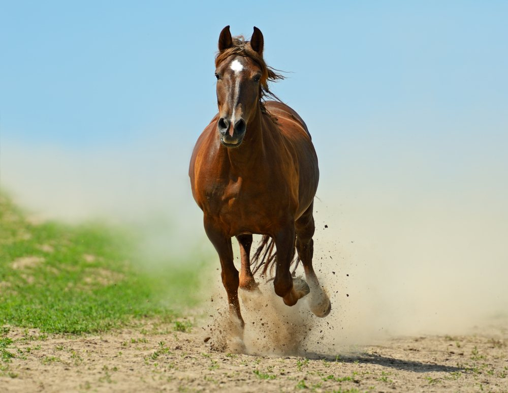 sonhar com cavalo correndo
