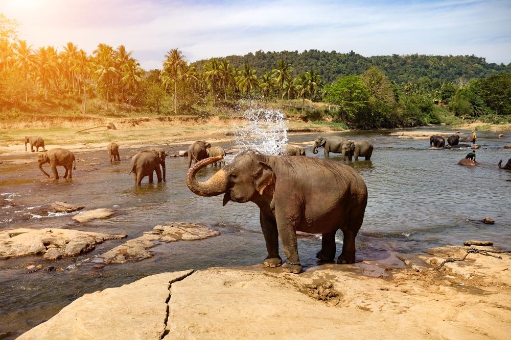 significado de sonhar com elefante