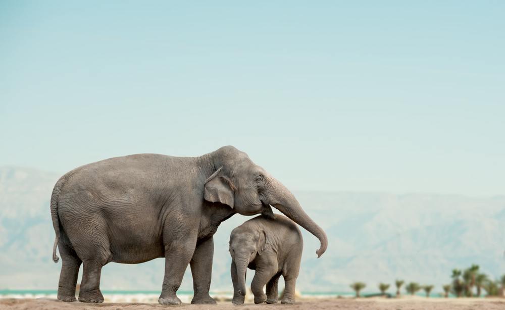o que significa sonhar com elefante