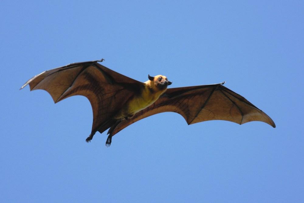 o que significa sonhar com morcego