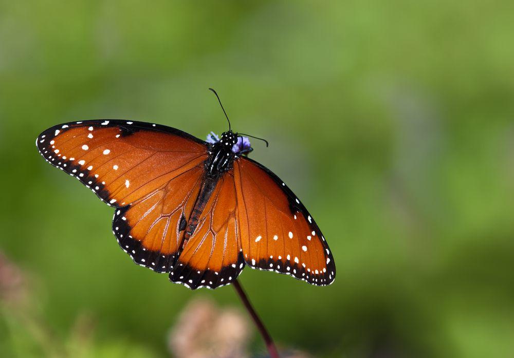 sonhar com borboleta laranja