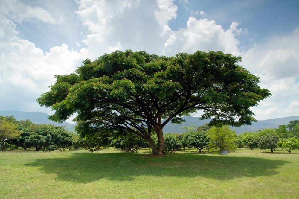 sonhar com árvore grande