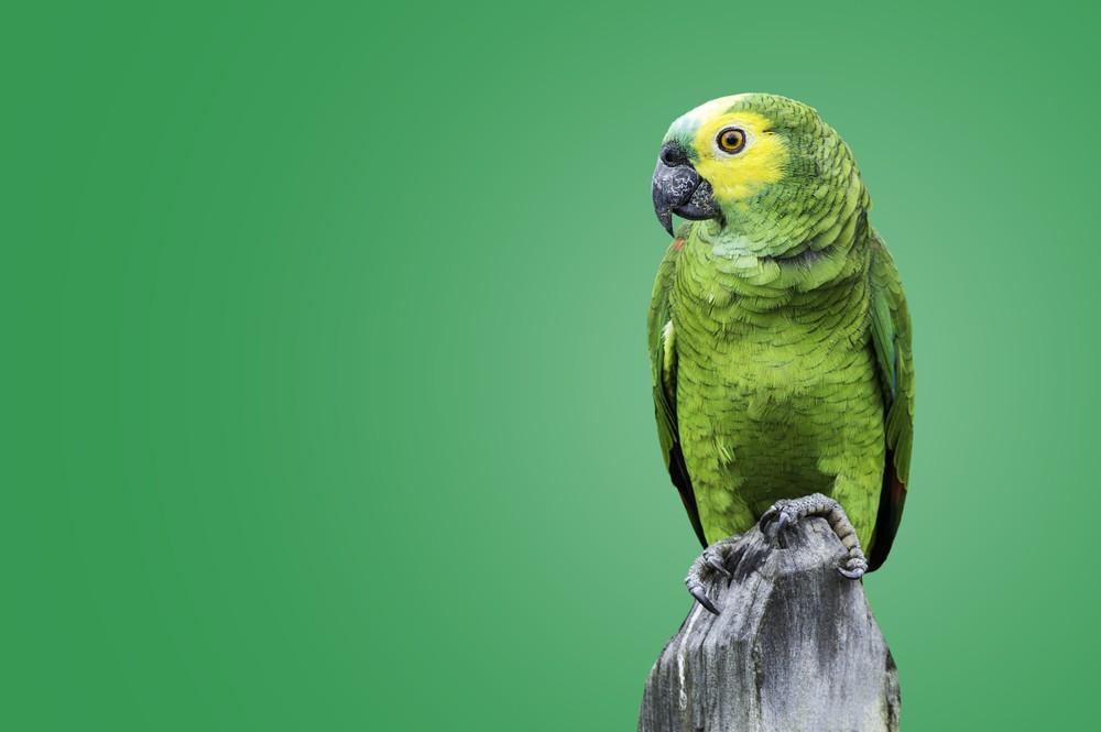 sonhar com papagaio verde