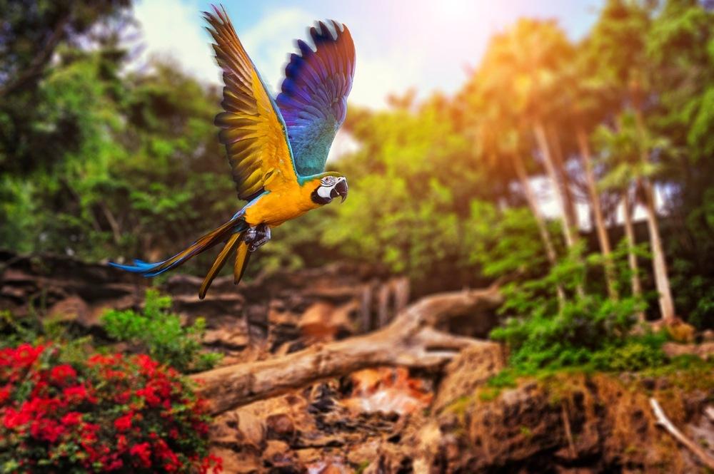 sonhar com papagaio voando