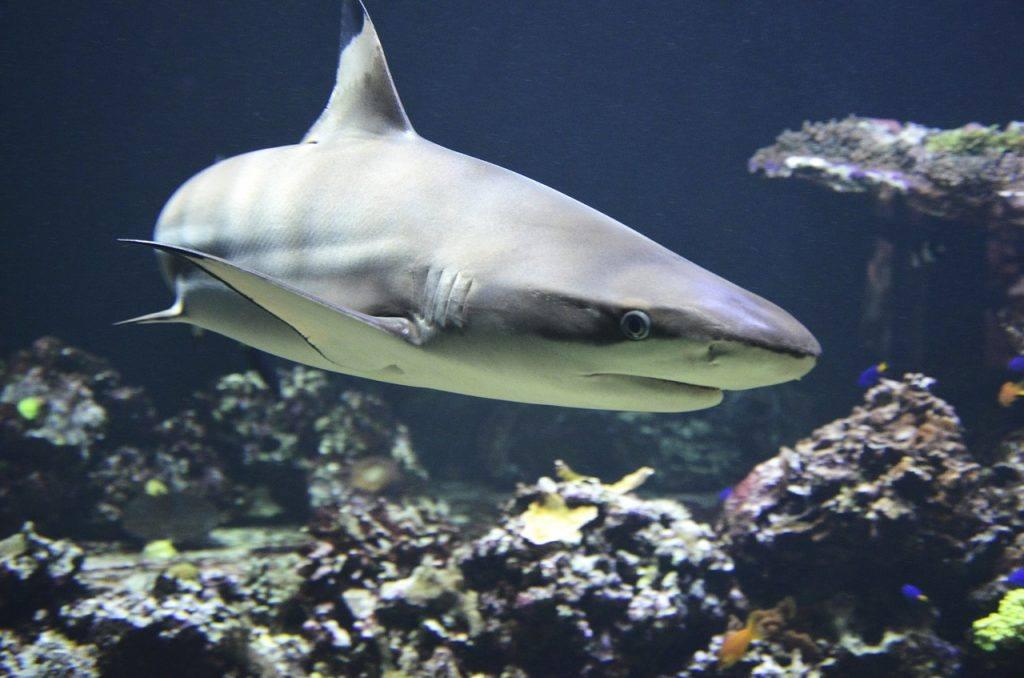 sonhar que vê um tubarão